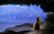 Orange-cat-looking-at-the-calm-lake