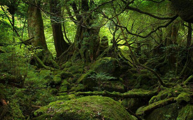 FileLush Green Forest Desktop Wallpaper
