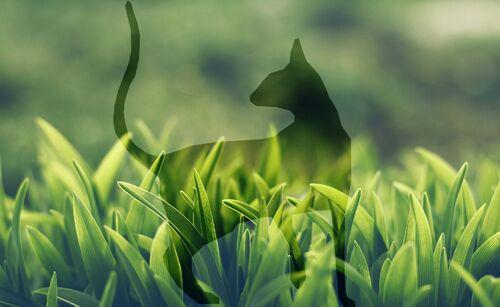 Macro Grass-wallpaper-9839687 20170720085409663