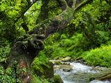 Clan Of Forgotten Crimson Lake/Helpful guide