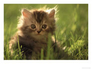 Tiny brown kitten