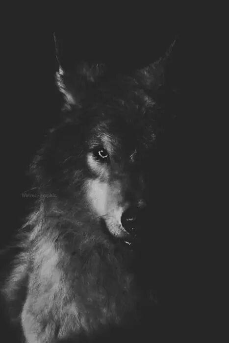 0766a437fcc7e34d72d7800c59ace604 Wolf Wallpaper Spirit