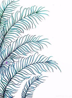 File8e7bcbdbebb4530ebb1511efcf784ec5 Palm Leaves Tumblr Google Search Video Backgrounds