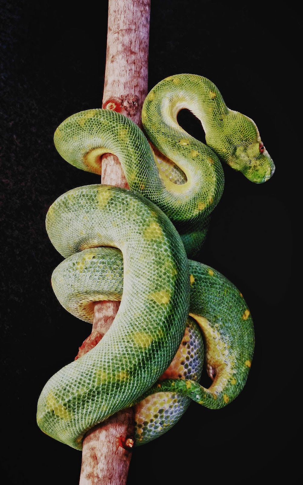 Hd images of snakes - Green snake hd wallpaper ...