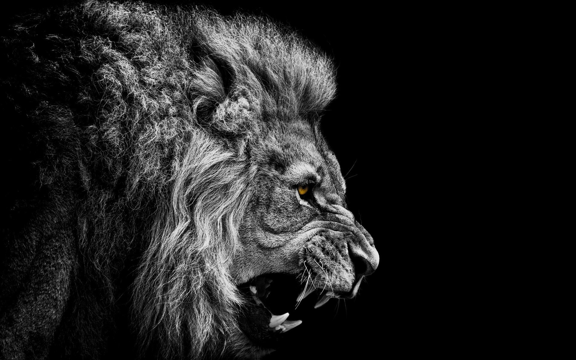 Image result for Lion roaring in the dark