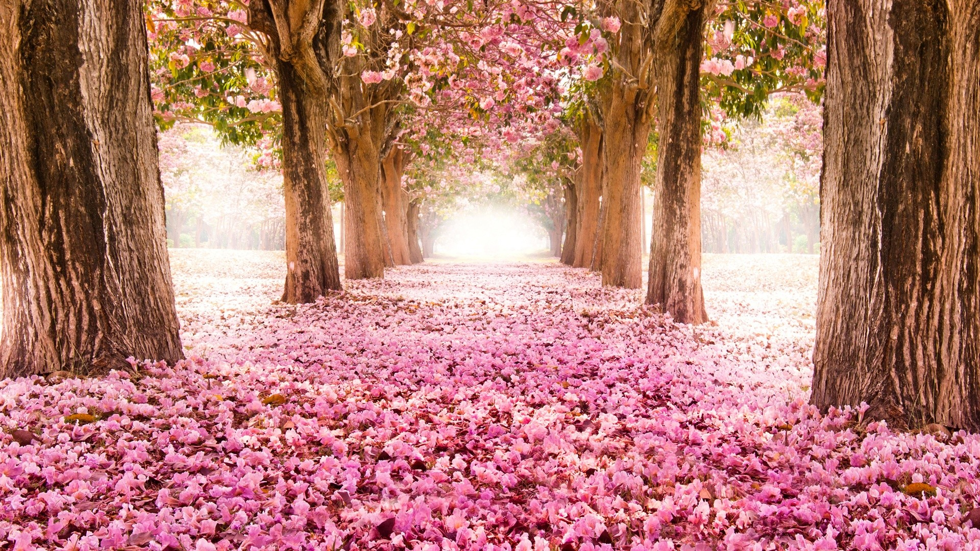 Image flower path pink forest beautiful flowers indus carpet flower path pink forest beautiful flowers indus carpet scenery trees hd desktop wallpaperg izmirmasajfo