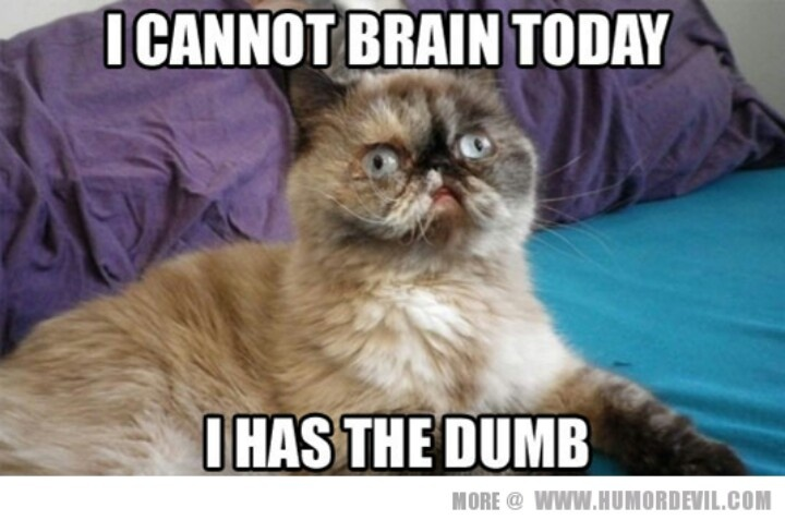 Funny Cat Meme Pictures : Image funny cat meme love g animal jam clans wiki fandom