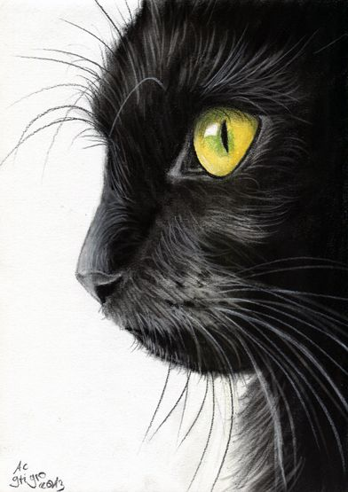 image 7630eb58bef258dc515a075151e9f491 black cat drawing kitty