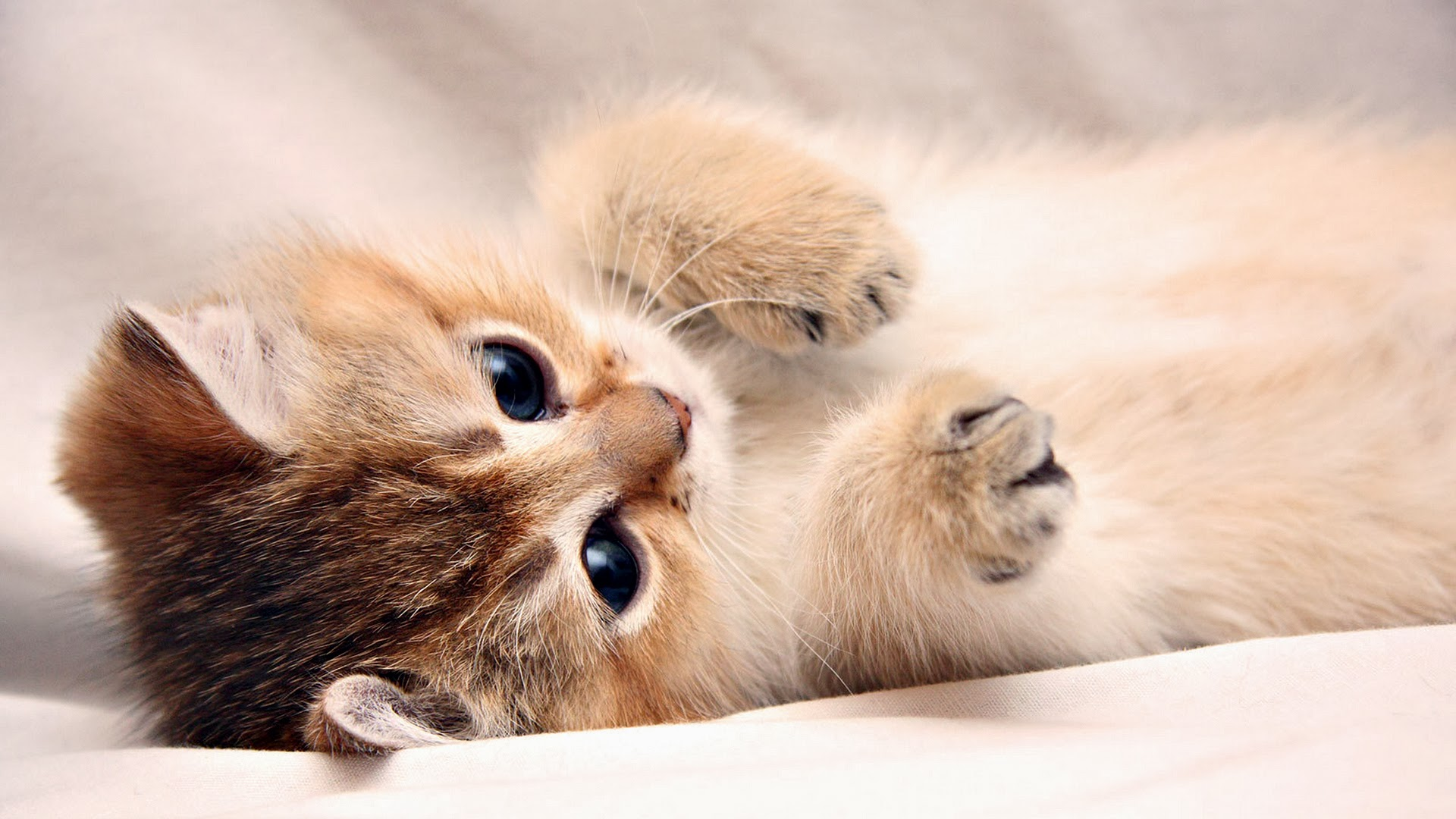 Image cute cats hd 6156 6429 hd animal - Cute kittens hd images ...