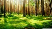 Forest-1515866143