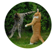 39365-cats-two-cats-fighting