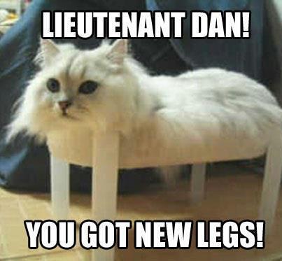 latest?cb=20170520134733 image funny forrest gump parody cat memes jpg animal jam clans