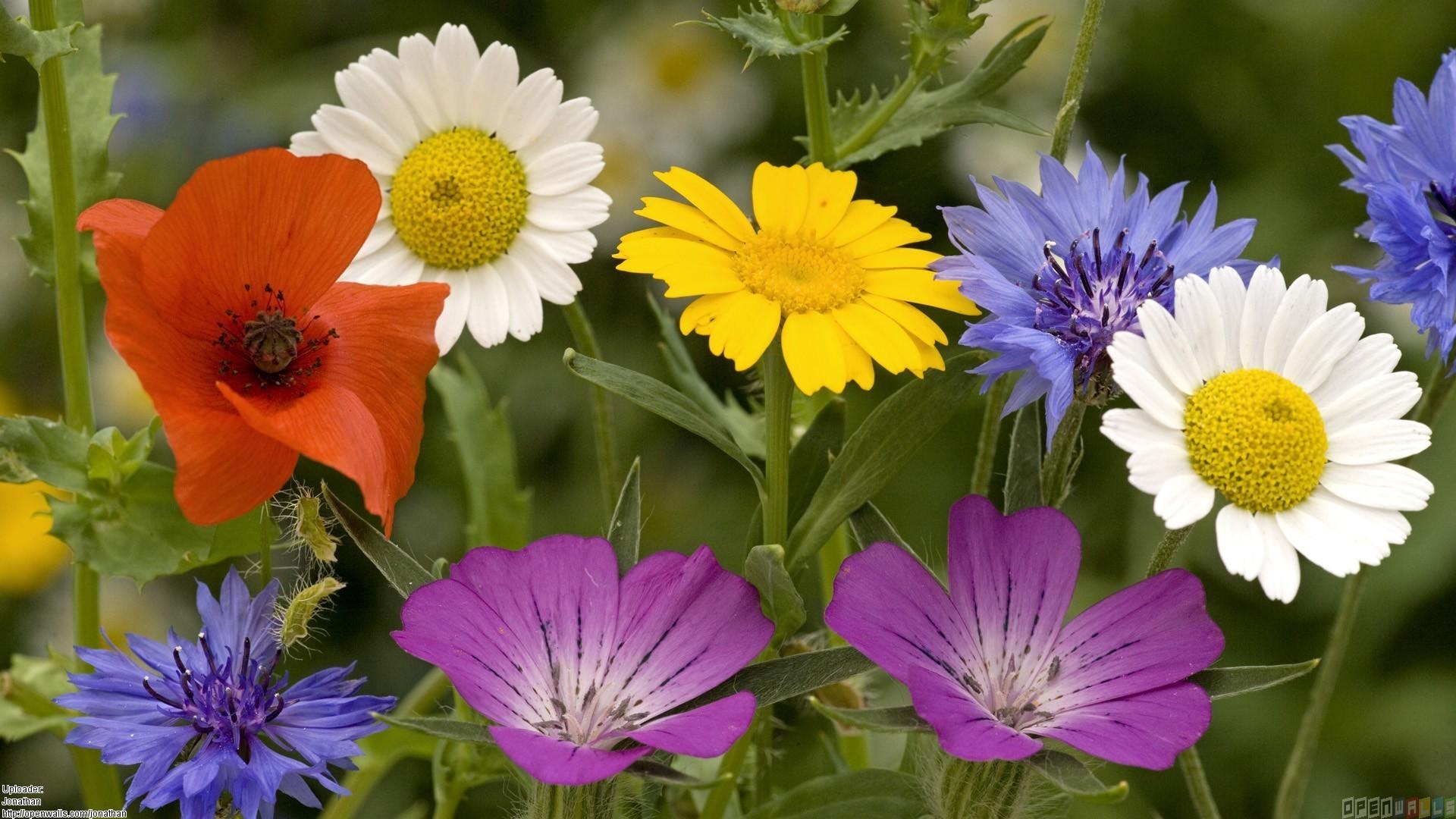 image summer flowers 1 1920x1080 jpg animal jam clans wiki