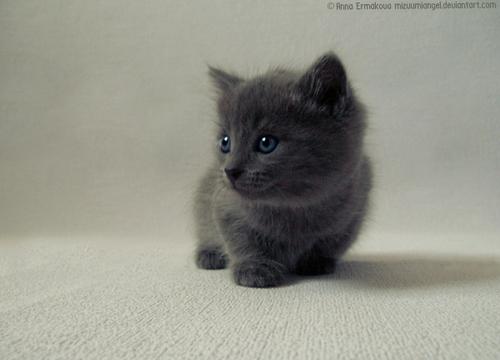 Image Black Cat Cute Ella Kitten Little Puppy Favim Com 65149 Jpg
