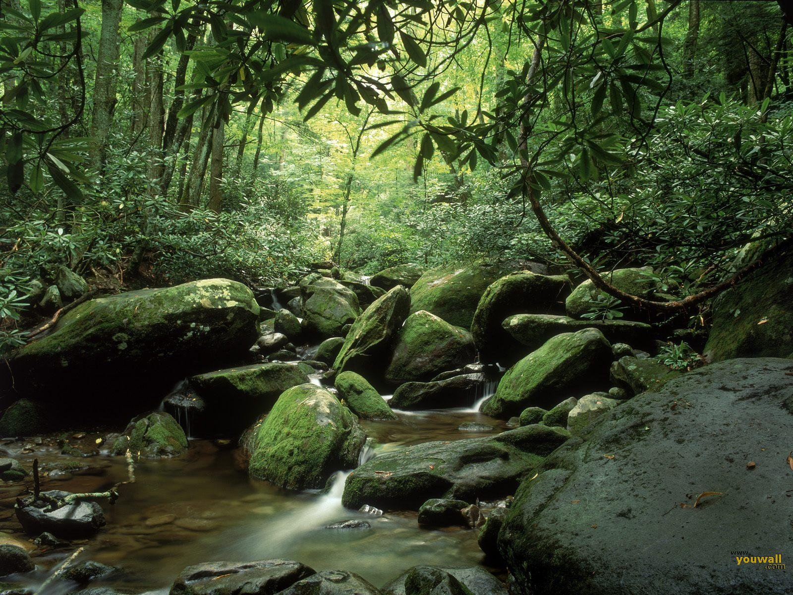Tropical Forest Wallpaper 7