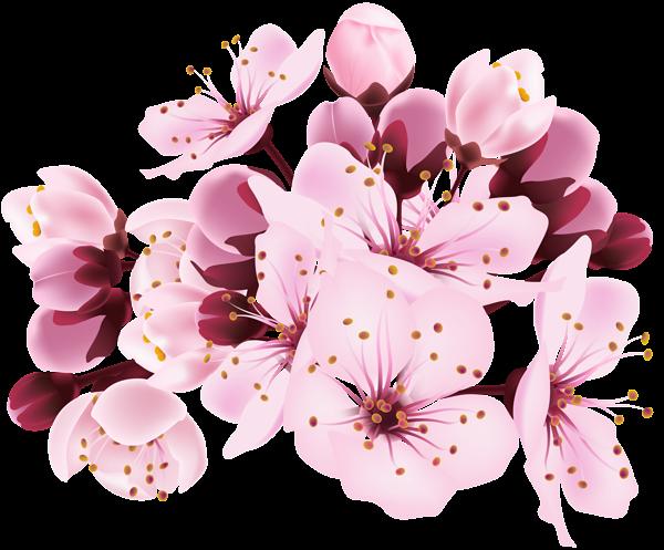 Image - Cherry Blossom Decorative Transparent Image.png ...