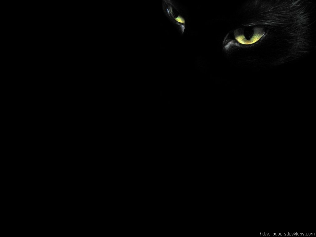 image black cat hd wallpapers 15 jpeg animal jam clans wiki