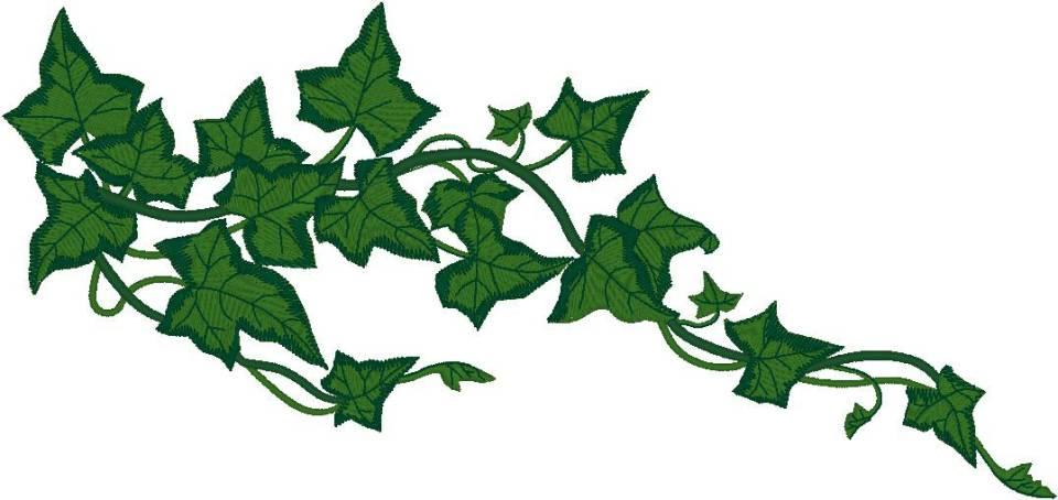 image ivy vine clip art phahhw clipart jpg animal jam clans wiki rh animal jam clans wikia com vine clip art free vine clipart border