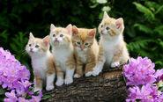 Curious kittens-wallpaper