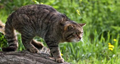 360px-cat