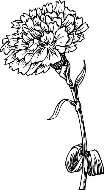 Image red black outline drawing sketch flower whiteg animal red black outline drawing sketch flower whiteg mightylinksfo