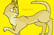 Sunglare full