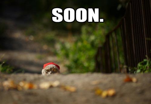 Funny Memes For Animals : Super funny animal memes postris