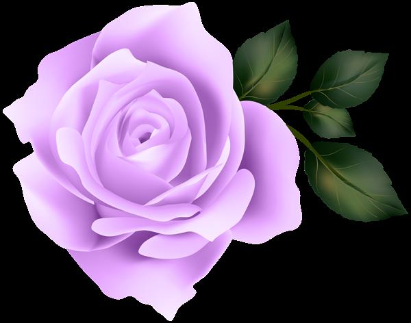 Image result for purple rose