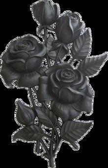 11-10-08 black rose