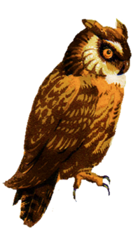Owl-clip-art-drawing-from-stamp