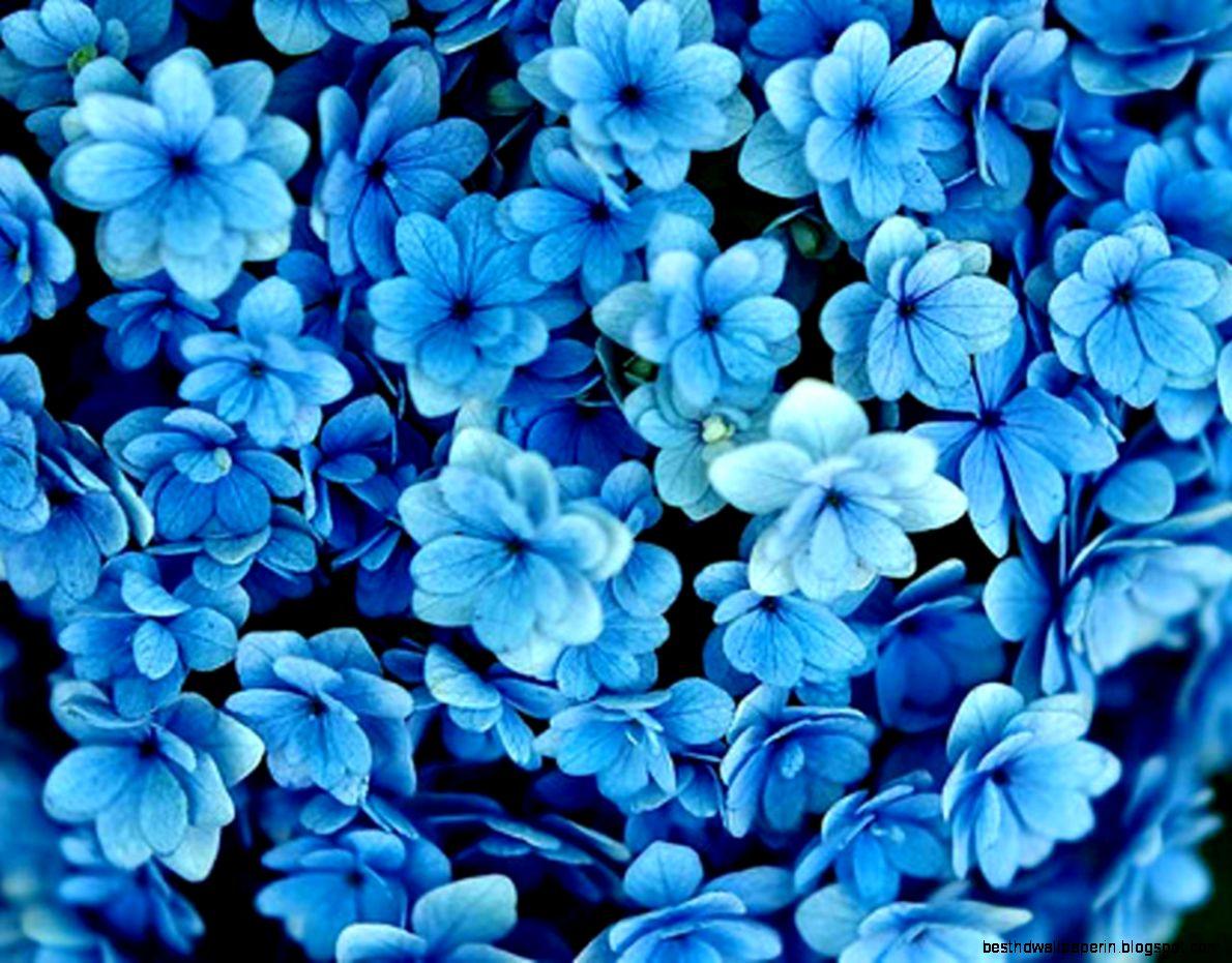Dark Blue And White Flowers: Dark-blue-flowers-tumblr-wallpaper-hd-photos-dark