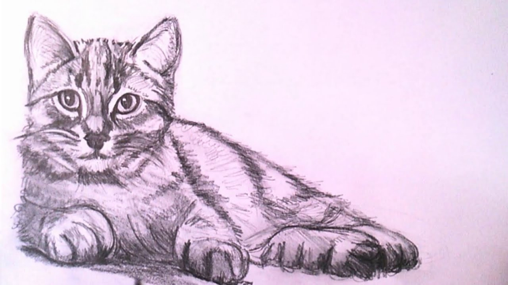Realistic cat drawing how to draw a realistic cat with pencil step step drawing the jpg