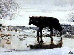 Black wolf banner