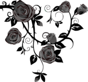 11-58-11-roses-303548 960 720