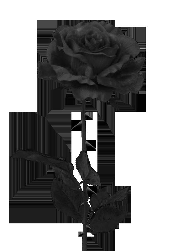 Image result for black rose png