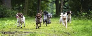 Dogs-Running1