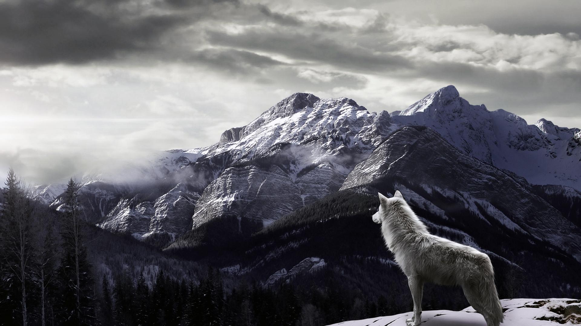 image - wolf-in-mountain-hd-desktop-wallpaper | animal jam clans