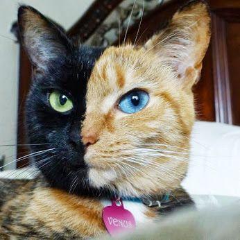 image venus le cat jpg animal jam clans wiki fandom powered by