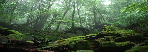 Dark Mossy Forest