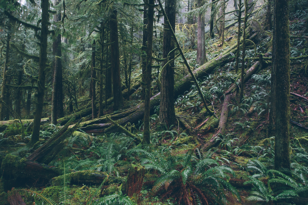 Pictures of Tropical Forest Background Tumblr - www stargate-rasa info