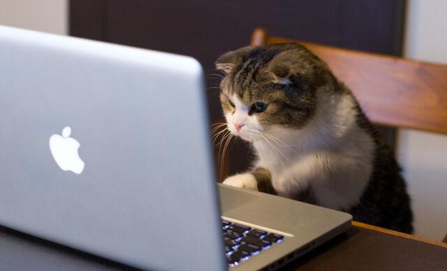 File:Cat-working-from-home2-snark-design.jpg