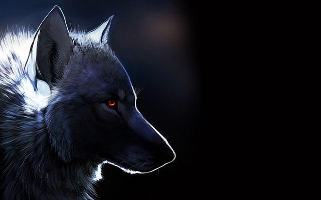 暗闇の中の狼