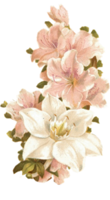 283144 Bertha-maguire-pink-flowers