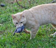 W prey hunters