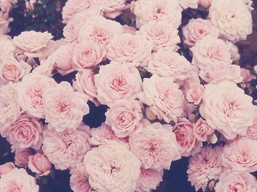 Image awesome pink flowers wallpaper tumblr simple white classic awesome pink flowers wallpaper tumblr simple white classic decoration dark black motive beautifulg mightylinksfo