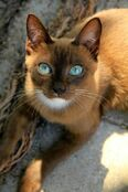 9172-best-cats-1-true-friends-in-life-images-on-pinterest