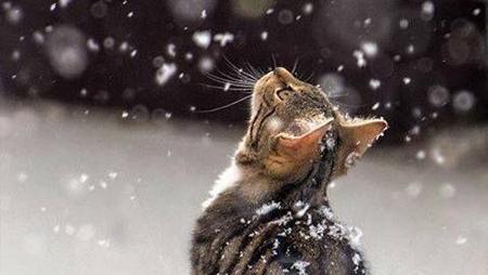 SNOWCLANnns