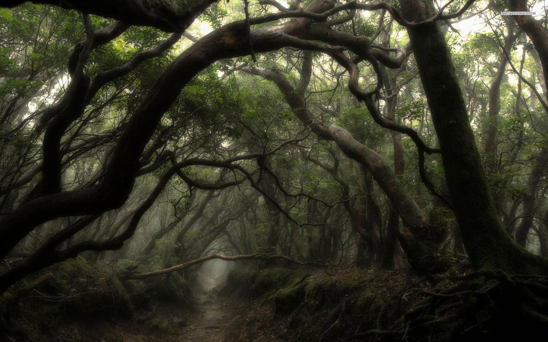 Dark Forest Widescreen Wallpaper
