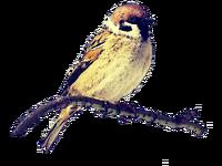 FinchBird