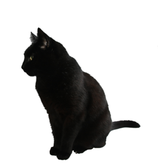 Black cat png by camelfobia-d5jpxce